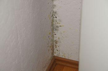 schimmel was ist das berhaupt schimmelberatung hannover schimmel entfernen vom fachmann. Black Bedroom Furniture Sets. Home Design Ideas