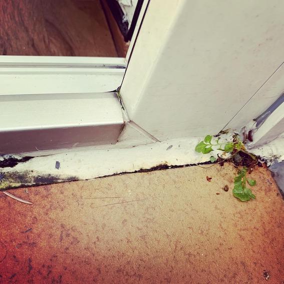 Schimmel durch undichten Balkon an Fassade